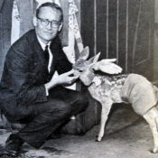 Henry and a 'properly dressed' fawn